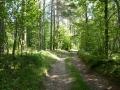Meža klusumā