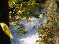 Dzīvais ūdens